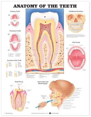 Anatomy of the Teeth Anatomical Chart - Anatomical Chart Company (Prepared for publication by)