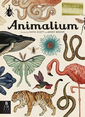 Animalium: Welcome to the Museum - Broom, Jenny