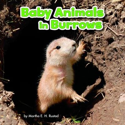Baby Animals in Burrows - Rustad, Martha E. H.