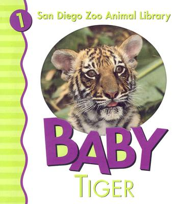 Baby Tiger - San Diego Zoo
