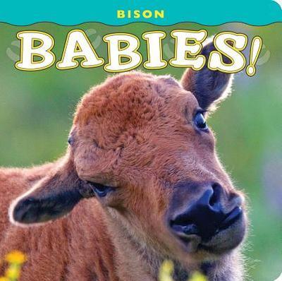 Bison Babies! - Jones, Donald M (Photographer)