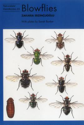 Blowflies - Erzinclioglu, Zakaria