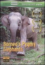 Borneo's Pygmy Elephants - Joe Kennedy