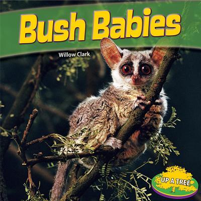 Bush Babies - Clark, Willow