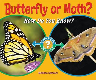 Butterfly or Moth?: How Do You Know? - Stewart, Melissa