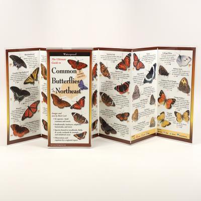Common Butterflies of the Northeast -
