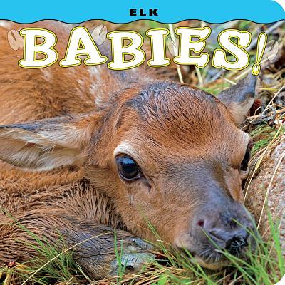Elk Babies! - Lehmann, Steph, and Jones, Don (Photographer)