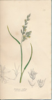 The Grasses of Great Britain, Illustrated By John Sowerby. Described, With Observations on Their Natural History and Uses. Parts XVIII & XIX