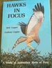 Hawks in Focus: a Study of Australia's Birds of Prey
