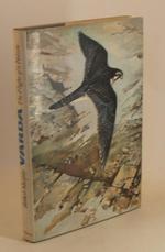 Varda the Flight of a Falcon