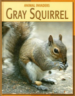 Gray Squirrel (Animal Invaders)
