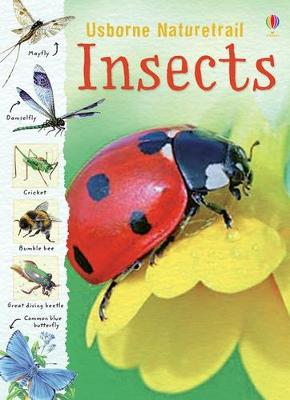 Insects -