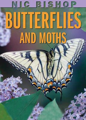 Nic Bishop Butterflies and Moths - Bishop, Nic