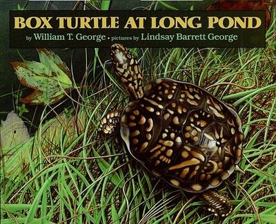 Box Turtle at Long Pond -