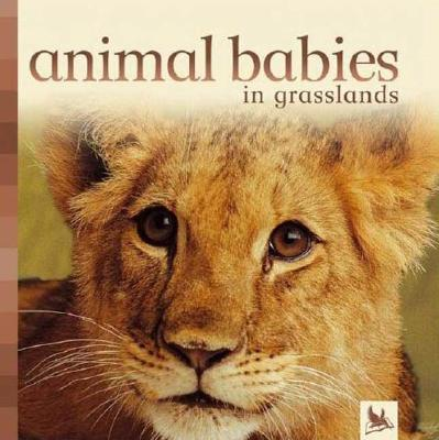 Animal Babies in Grasslands - Kingfisher Books (Editor)