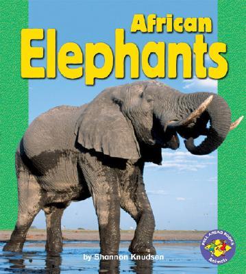African Elephants - Knudsen, Shannon