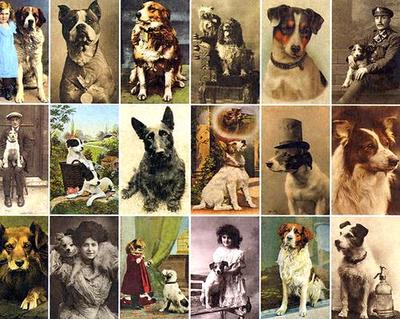 Postcard Dogs - Hall, Libby