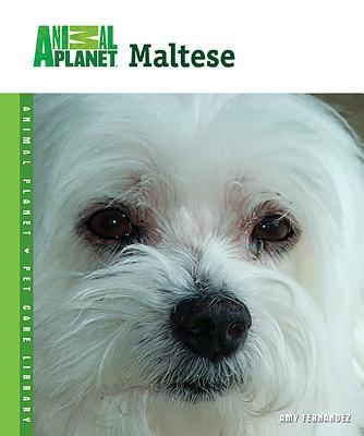 Maltese - Fernandez, Amy