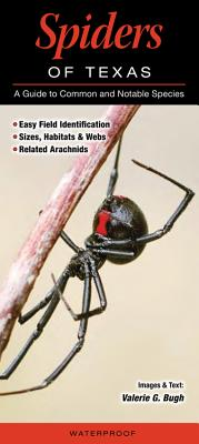 Spiders of Texas: A Guide to Common and Notable Species - Bugh, Valerie G