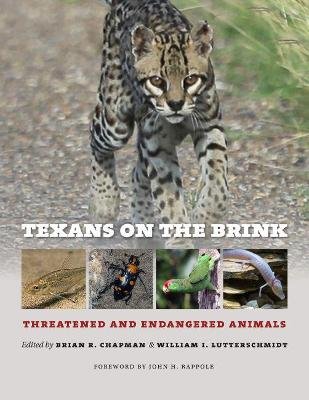 Texans on the Brink: Threatened and Endangered Animals - Chapman, Brian R (Editor), and Lutterschmidt, William I (Editor), and Rappole, John H (Foreword by)