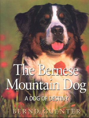 The Bernese Mountain Dog: A Dog of Destiny - Guenter, Bernd