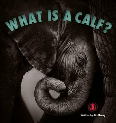 What is a Calf? - Urang, Siri
