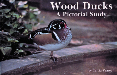 Wood Ducks a Pictorial Study - Veasey, Tricia
