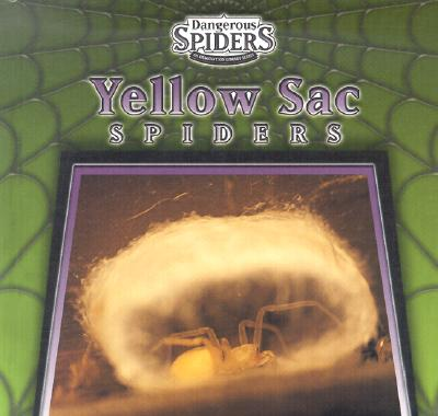 Yellow Sac Spiders - Ethan, Eric